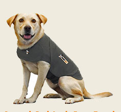 Thundershirt calms anxious pets